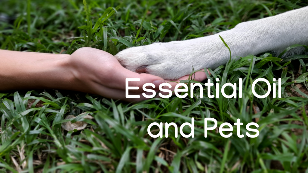 Are Essential oils safe for pets, cats and dogs