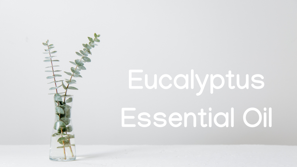 Eucalyptus Oil uses and benefits